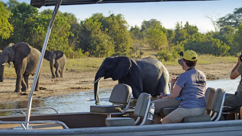 Zu den Elefanten am Chobe-Fluss © Diamir