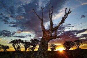 Köcherbäume sieht man allenthalben