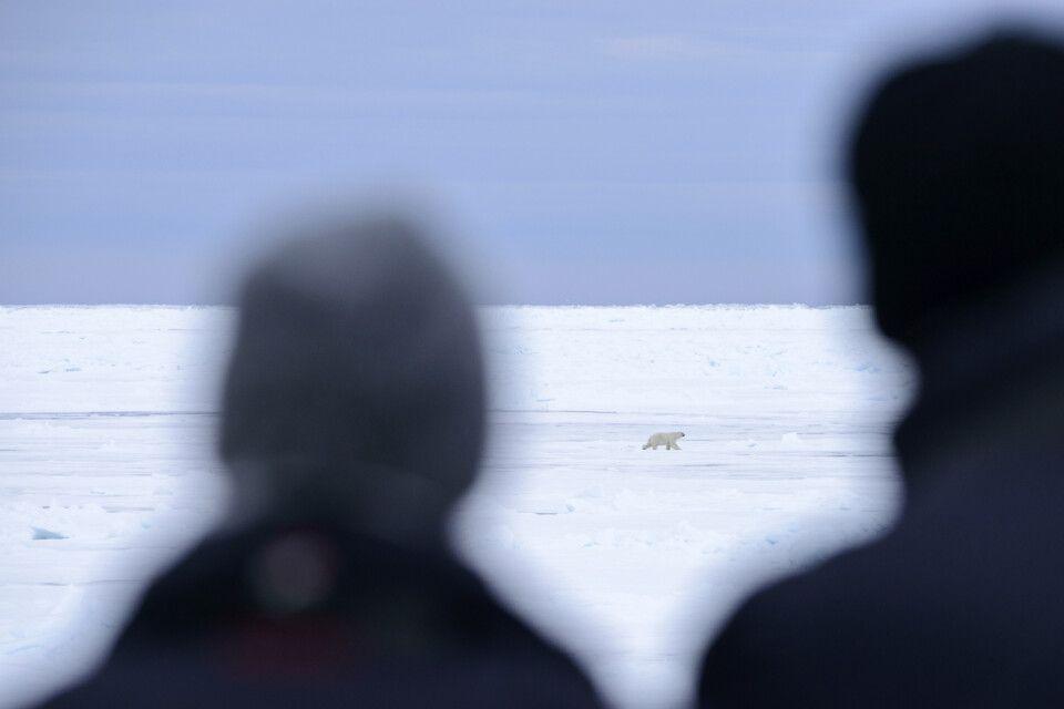 """Relativ weit weg, aber doch ein Bär – die erste Begegnung mit dem """"König der Arktis"""""""