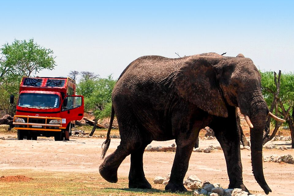 Roter Safaritruck trifft grauen Elefanten