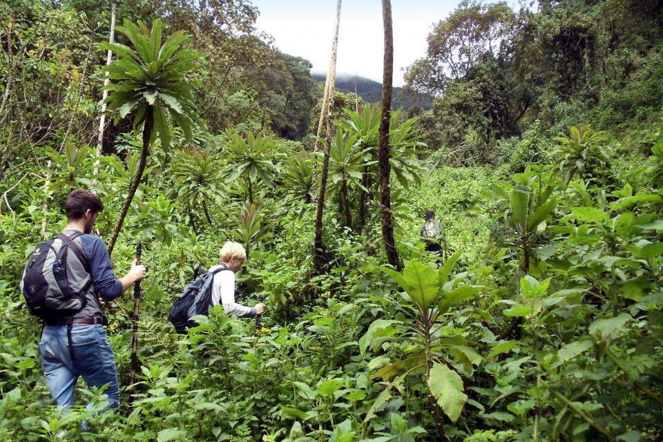 Auf gehts zum Gorilla Tracking