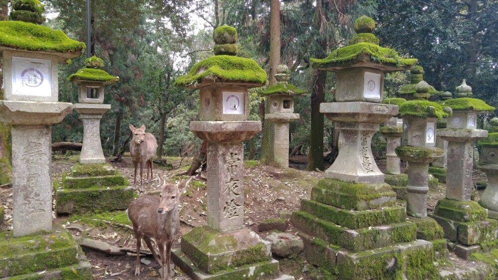 Japan Nara Odawara