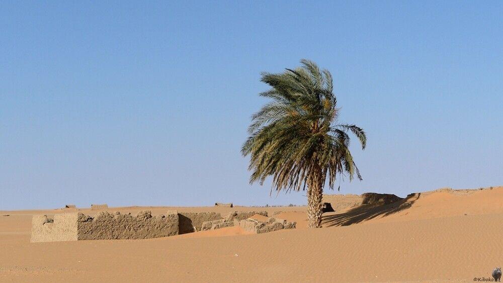 12. Palme in der Wüste