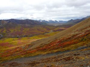 Herbstliche Tundra, Tombstone Mountains, Yukon