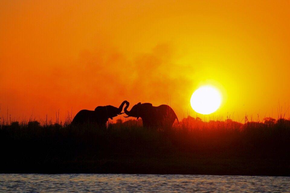 Elefanten im Sonnenuntergang