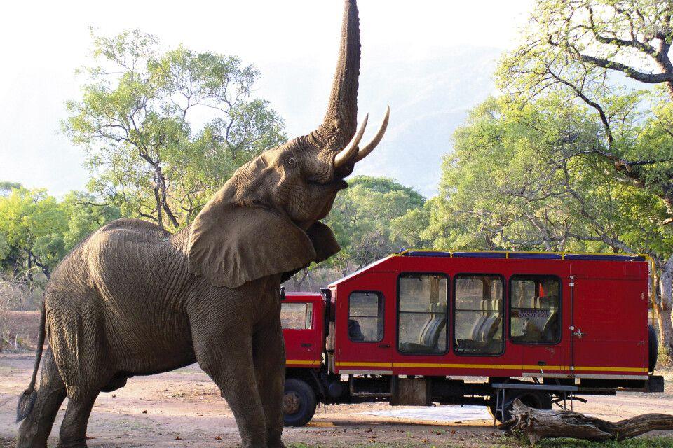 Elefant vor einem Sunway Safaritruck