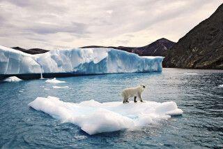 Eisbär auf Eisscholle, Baffin Island