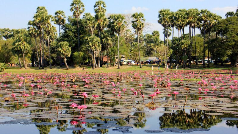 Seerosenblüte in einem Wasserspeicher in Angkor © Diamir