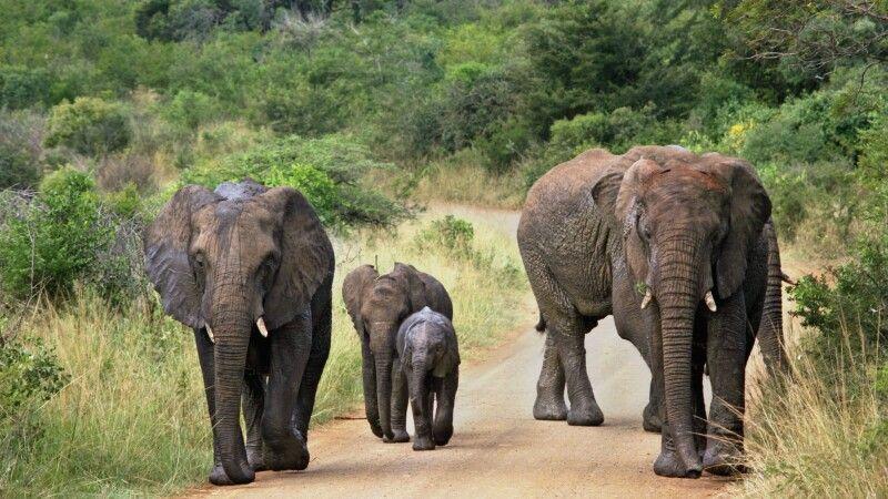 Elefantenfamilie © Diamir