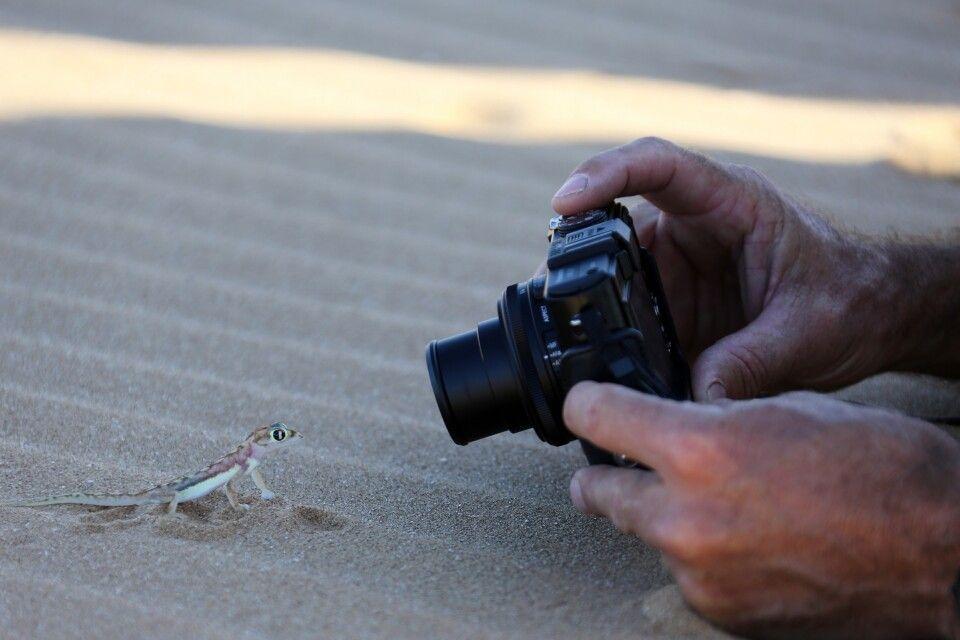 Putziger Gecko, Living Desert Tour, Swakopmund