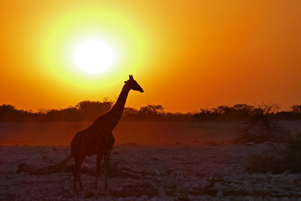 Ausklang eines Tages in Namibia