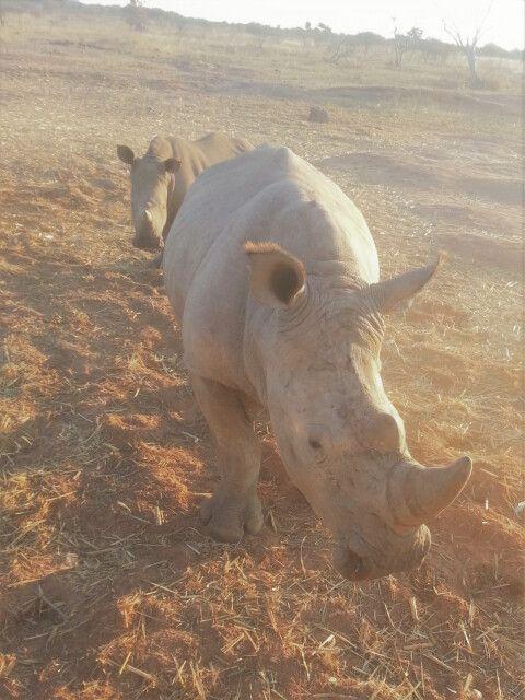 Auge in Auge mit den Nashörnern, Sundowner-Fahrt auf der Wabi Game Lodge