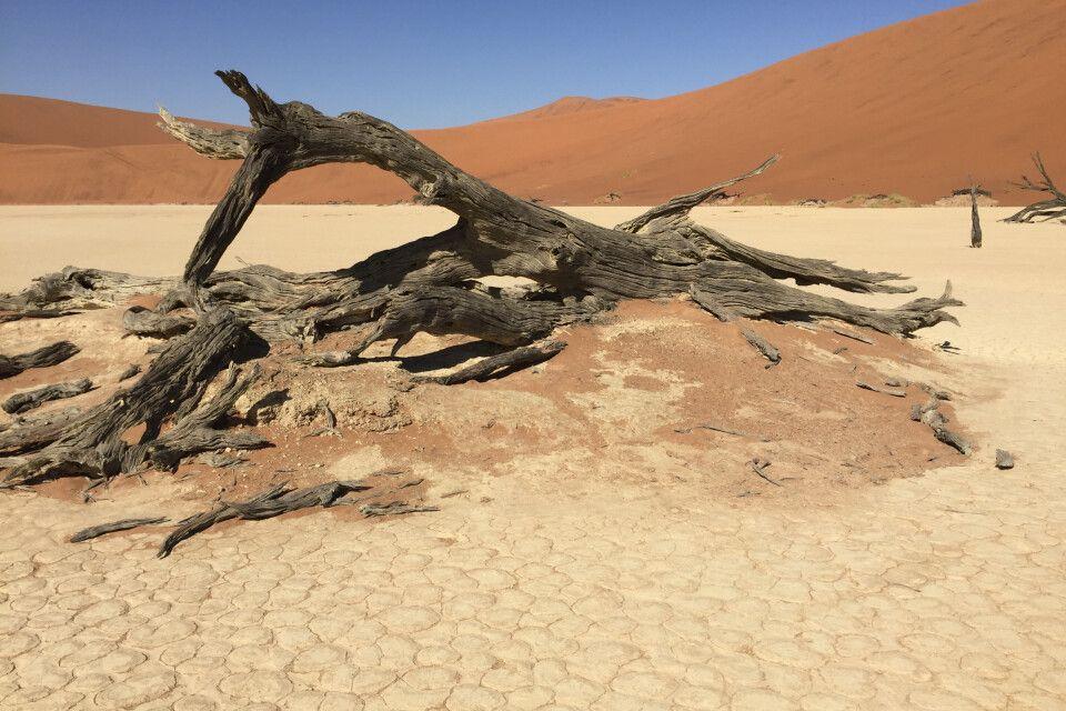 Nach der Dünenwanderung geht es mit dem Allradfahrzeug über sandige Pisten ins nahegelegene Deadvlei, wo über 500  Jahre alten, abgestorbenen Bäume auf euch warten. Egal wo man hinschaut, Fotomotive finden sich an diesem besonderen Ort in einem 360-Grad-W