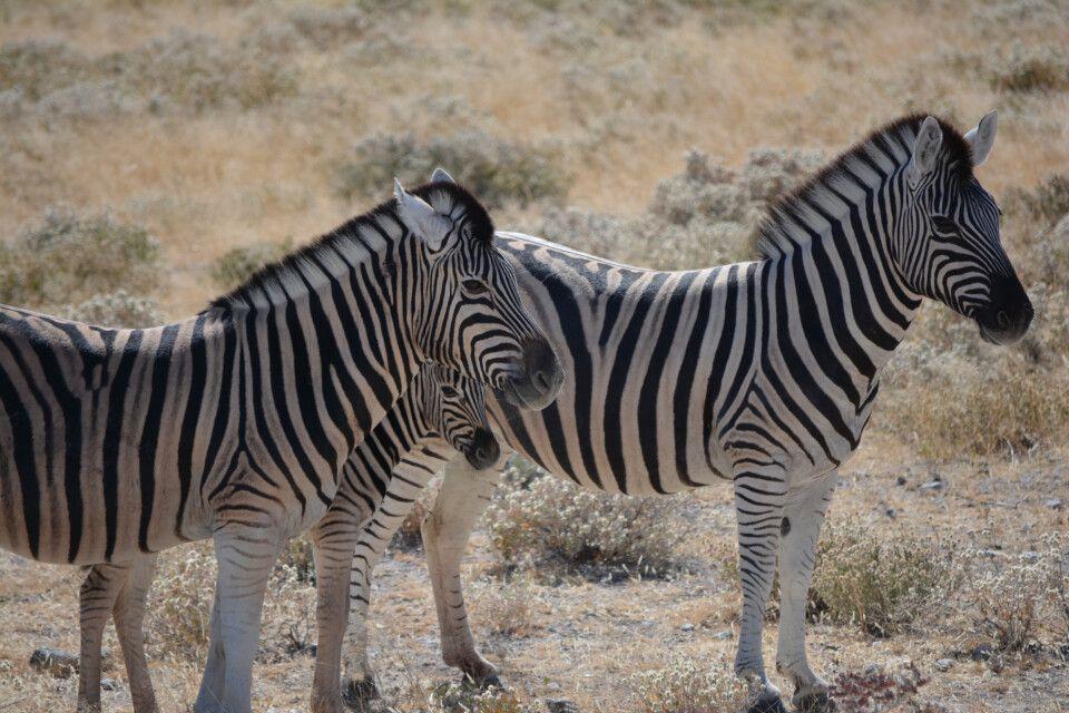 Anderthalb Tage Zeit im Etosha-Nationalpark für ausführliche Tierbeobachtungen