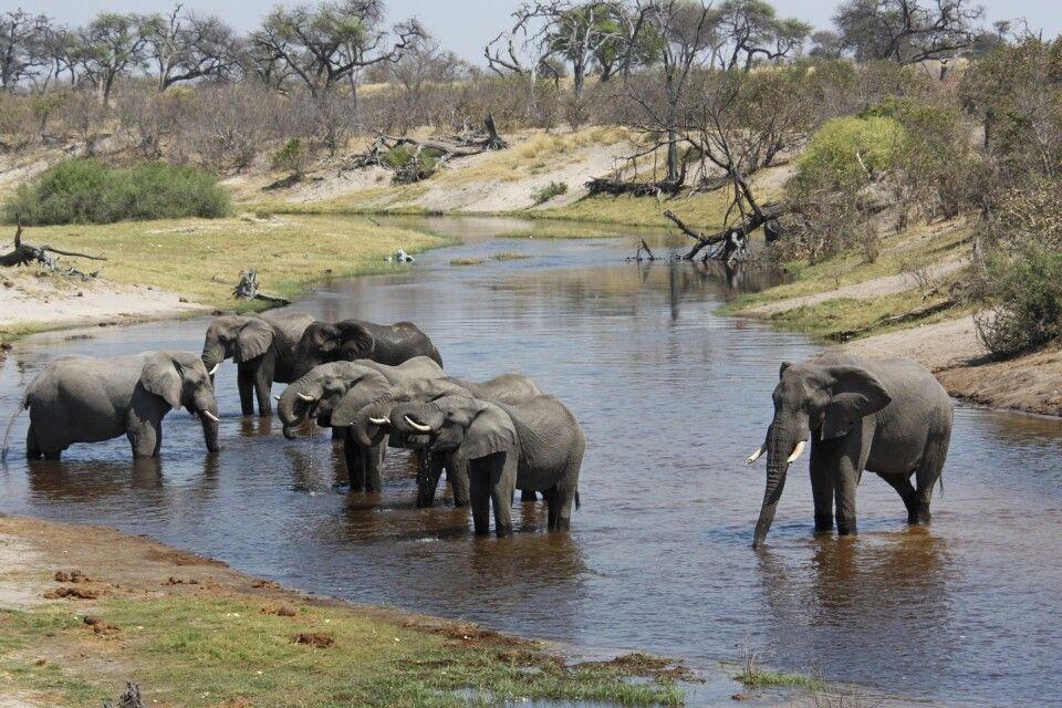 Elefantenherde erfrischt sich