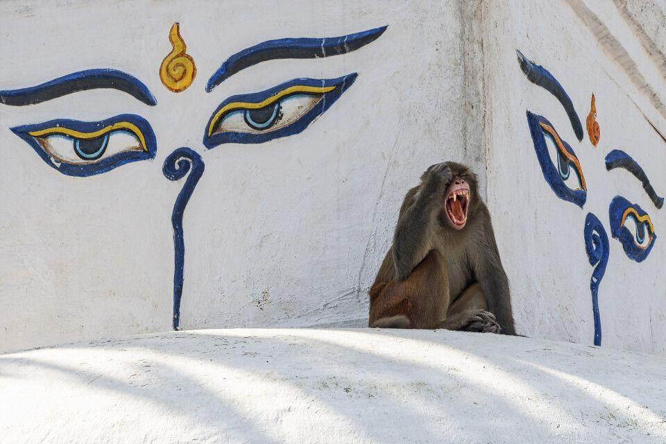 Affe vor Buddha-Außendekoration in Nepal