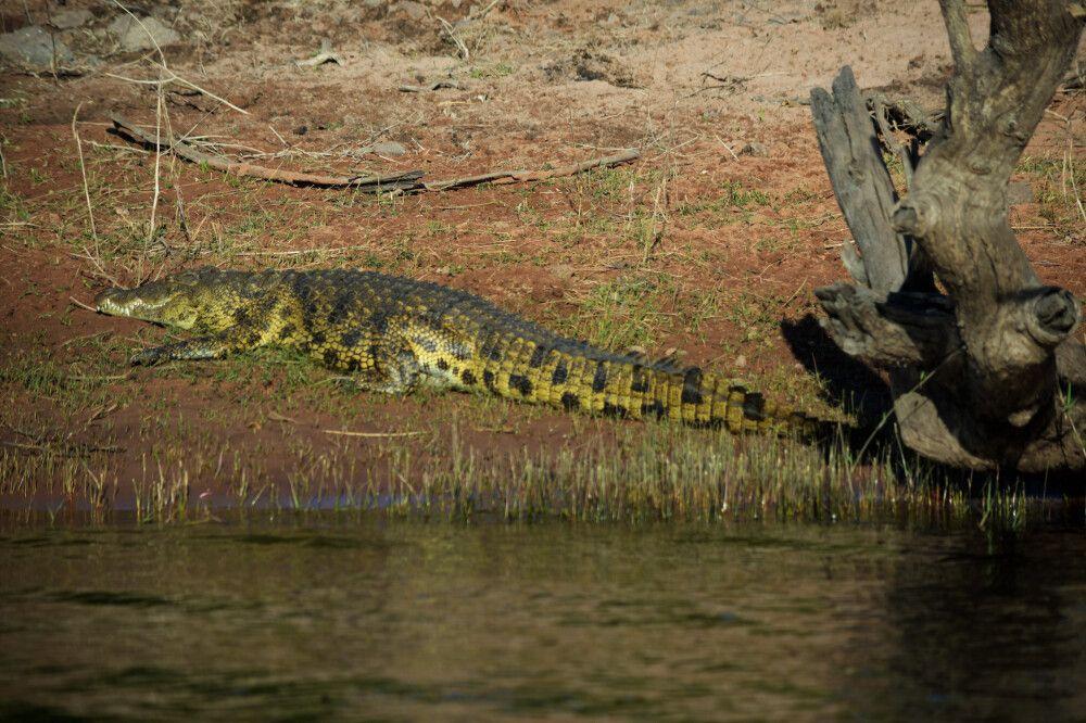 Bootstour im Chobe-Nationalpark