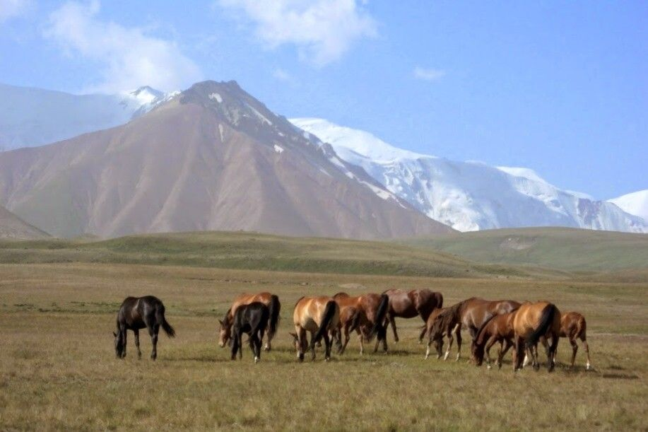 Pferde in Kirgistan
