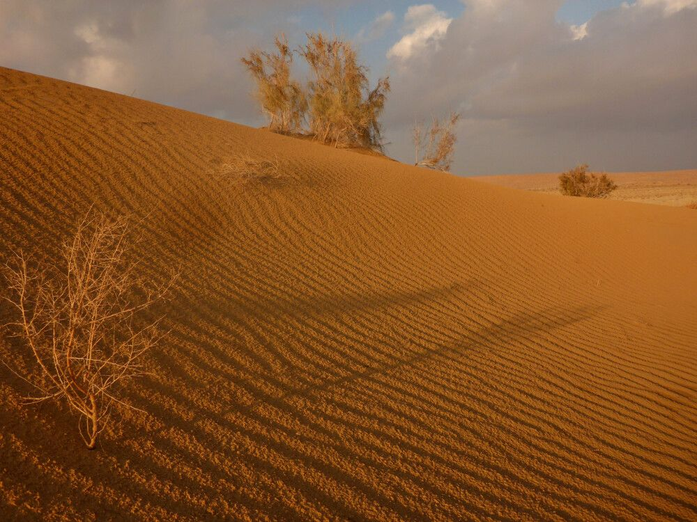 TKMKAR_011115_1SHI_Wüste-Karakum_P1140420.jpg