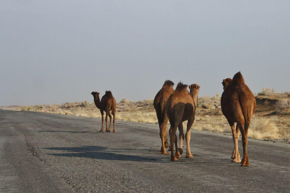 Straße quer durch die Wüste