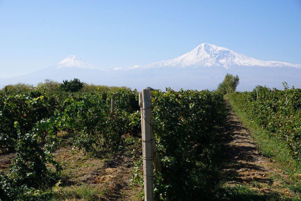 Ararat vor Weinfeld