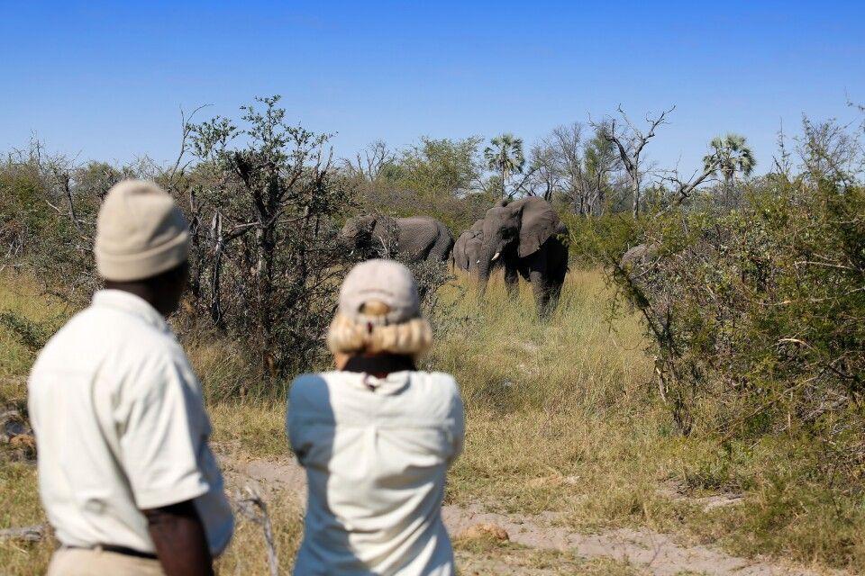 Pirschwanderung im Okavango Delta