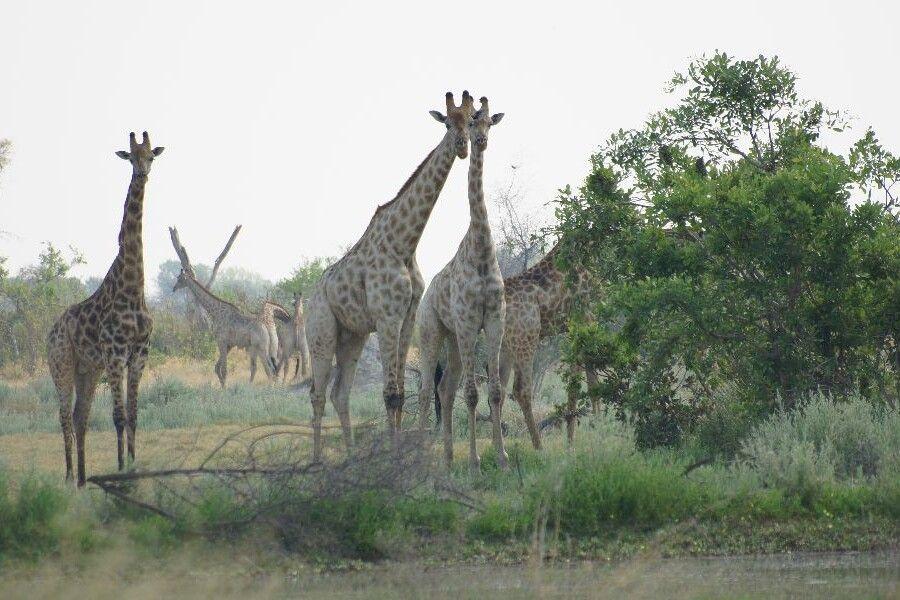 Im Okavango-Delta