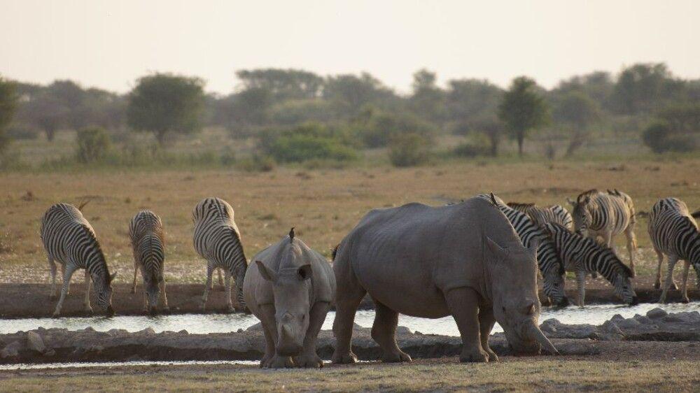 BOTSWC_031010_4ESW_03_NP_Khama_Rhino_Sanctuary__Breitmaulnashoerner___Zebras.JPG