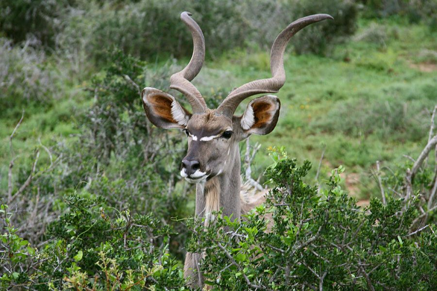 Im Addo-Nationalpark