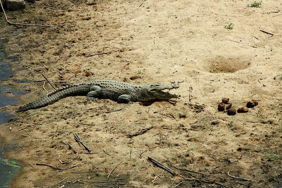 Im Krüger-Nationalpark