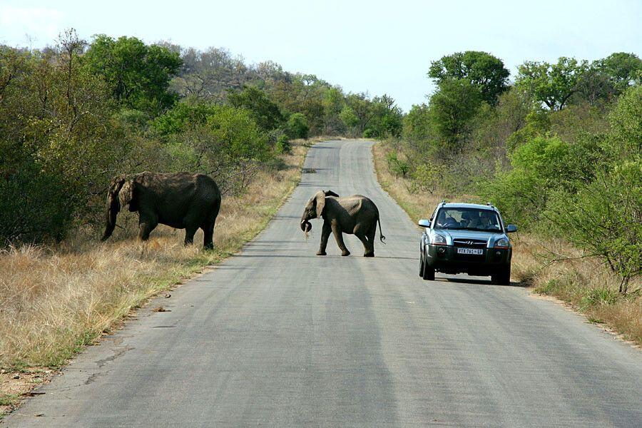 Elefantenfamilie im Krüger-Nationalpark