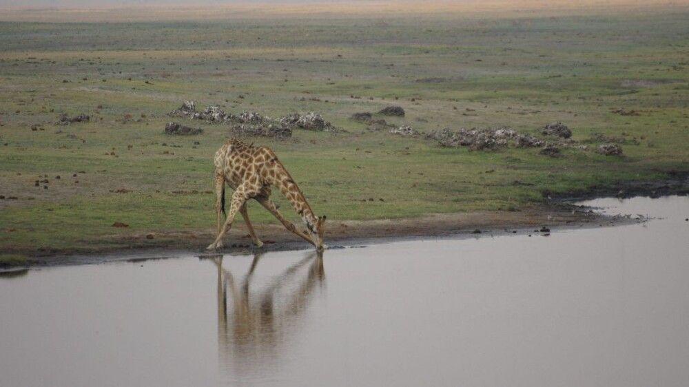 BOTSWC_031010_4ESW_34_NP_Chobe_Giraffe_.JPG