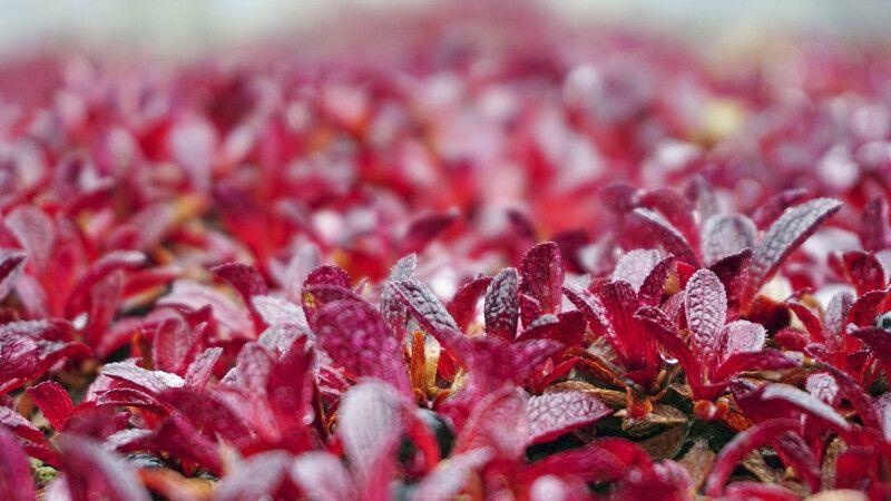 Herbstlaubfärbung © Diamir