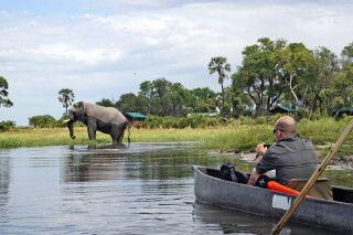 Moremi Crossing, Elefantensichtung mit dem Mokoro