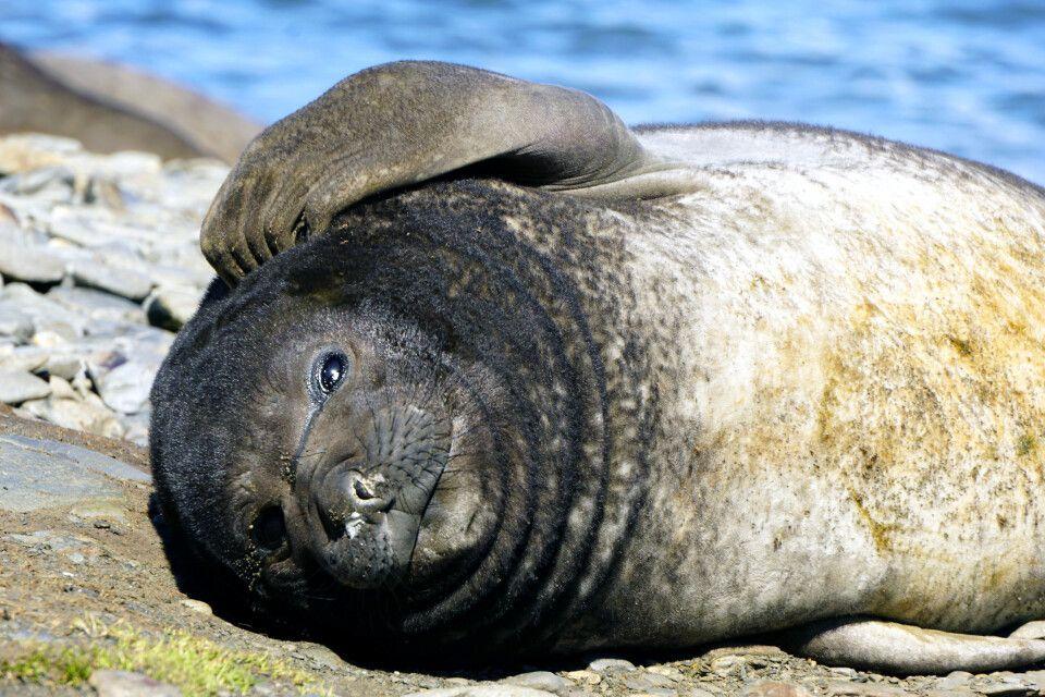 Nachdenkliche Robbe im Sonnenschein