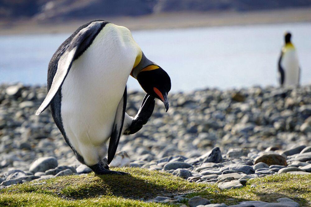 Pinguin-Yoga im Sonnenschein