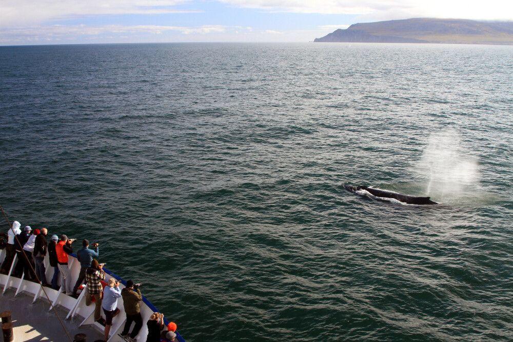 Wal vor dem Kreuzfahrtschiff