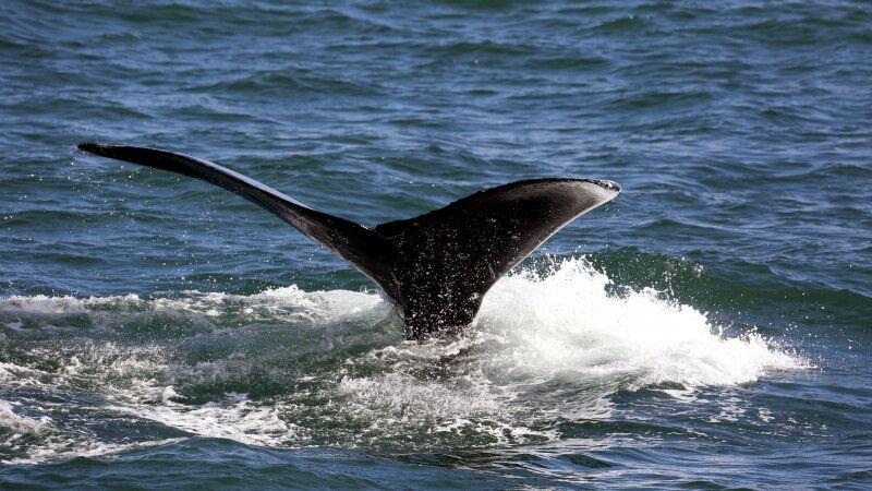 Walbeobachtung © Diamir
