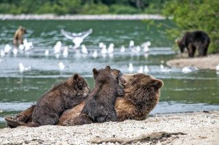 Mutter mit Bärenkindern