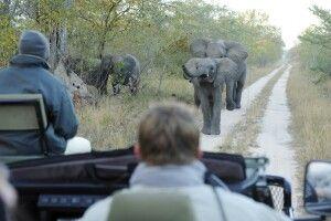 Auf Safari, Sabi Sands, Krüger-Nationalpark, Südafrika