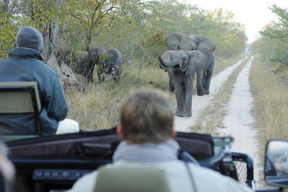 Auf Safari - Krüger-Nationalpark