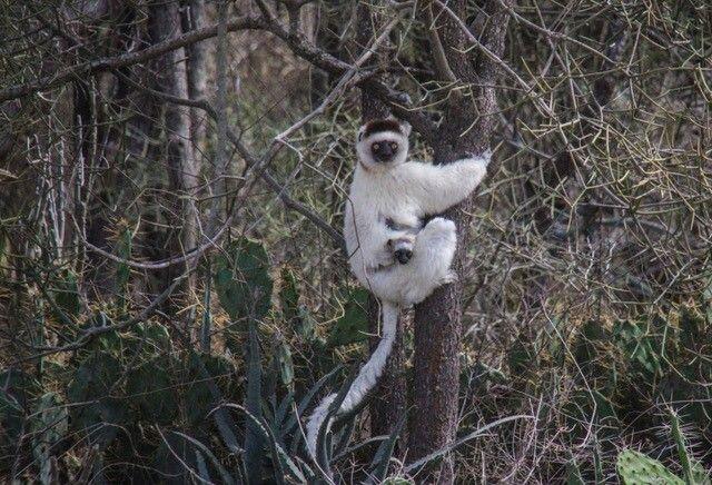 Die einzigartige Welt Madagaskars