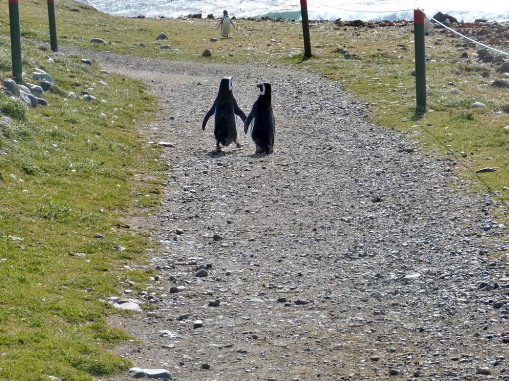 Pinguine haben hier immer Vorfahrt