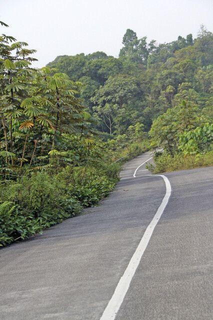Auf der Asphaltstraße durch den Urwald bei Ureka