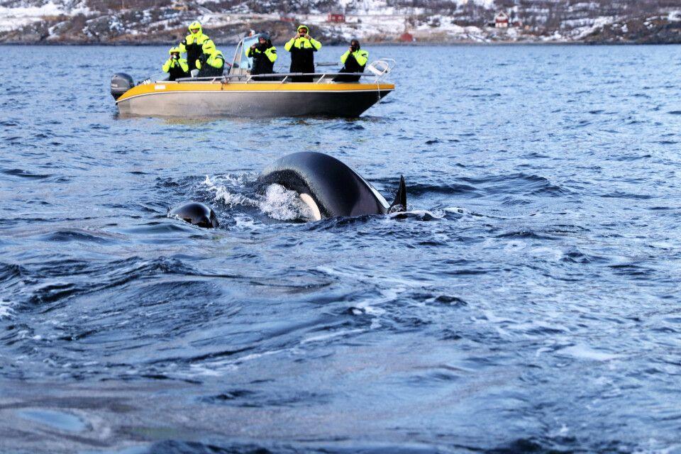 Respektvolle Walbeobachtung