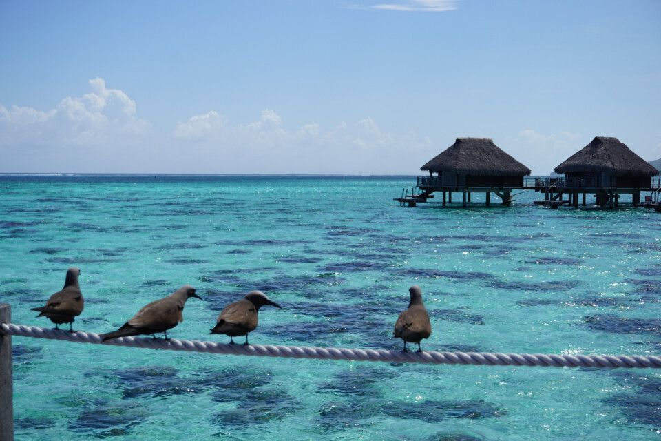 Overwaterbungalow auf Moorea (Hilton)