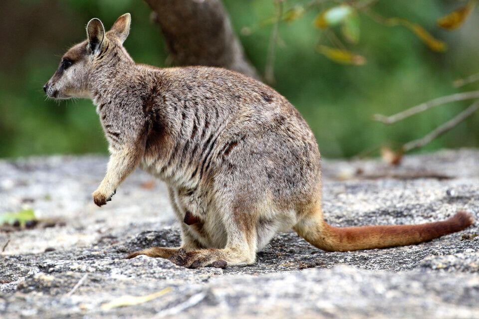 Australien – statt träumen selbst erleben