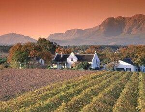 Weinberge um Stellenbosch