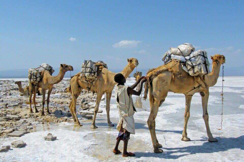 Salzkarawanen in der Danakil