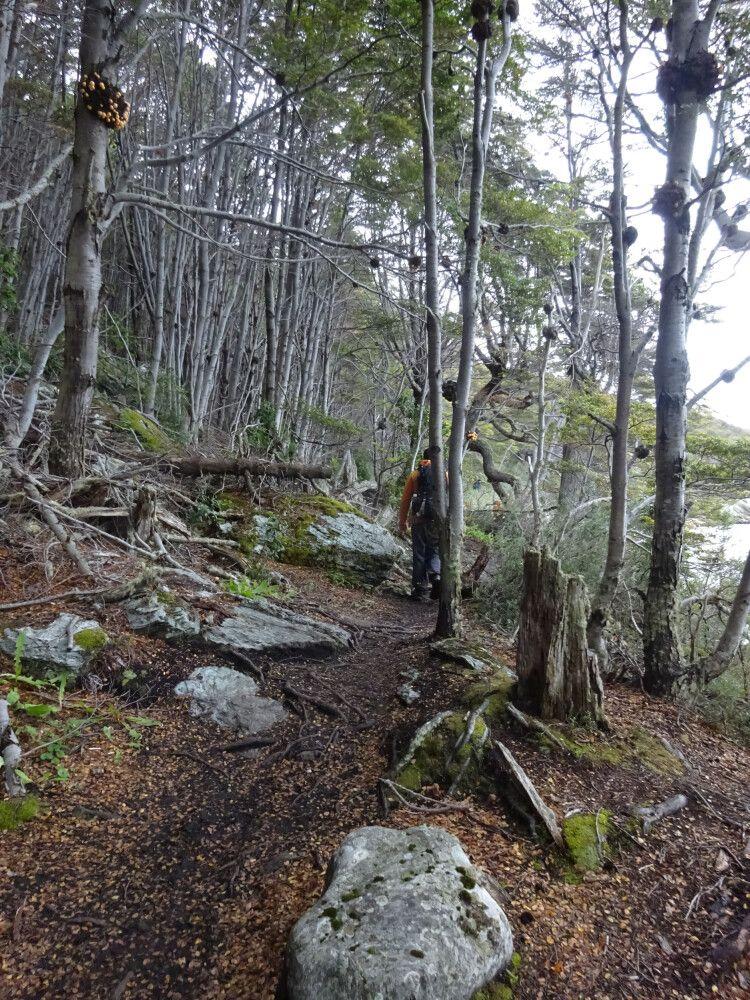 Wanderung im Tierra del Fuego NP